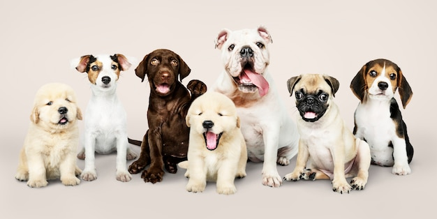 Group portrait of adorable puppies Free Photo