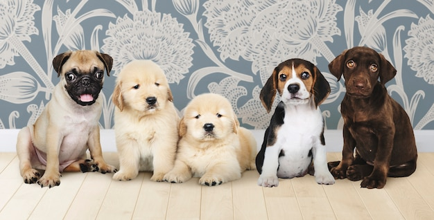 Group portrait of five adorable puppies Free Photo
