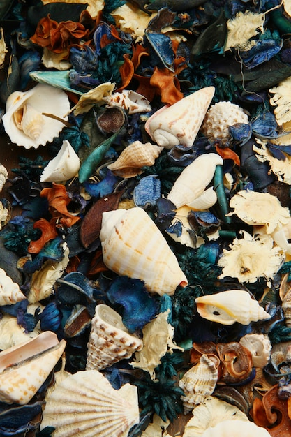 Group of potpourri and shell Premium Photo