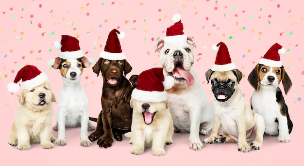 Group of puppies wearing christmas hats Free Photo