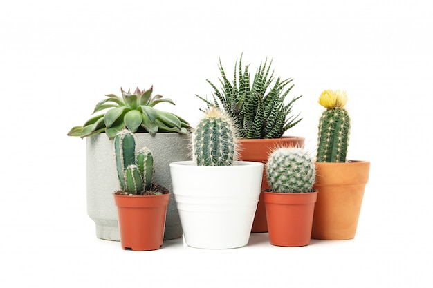 Group of succulent plants isolated on white surface Premium Photo