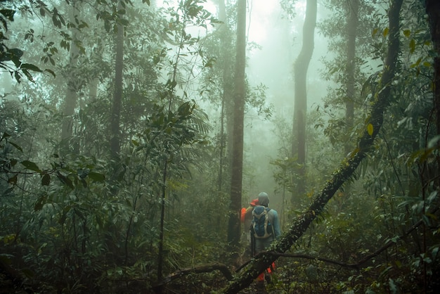 Group of trekking in rainforest jungle. adventure and explorer . Premium Photo