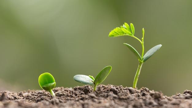 農業栽培栽培植え付け、ビジネスgrowhtアップコンセプト Premium写真