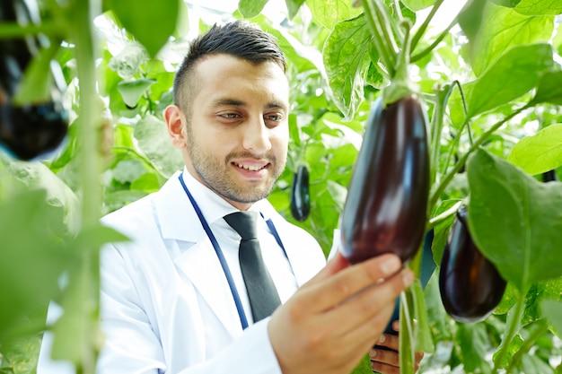 Growing eggplants Free Photo