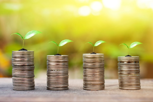 Growing money and plant on coins stack finance and investment concept wood background Premium Photo