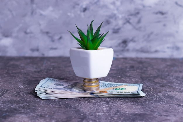 A growing money tree made from banknotes and money coins to support small businesses Premium Photo