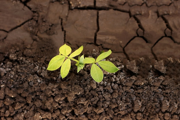 Growing plant on earth Premium Photo