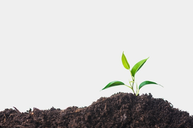 Growing plant on soil against white background Premium Photo