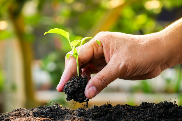 Growth concept, hands are planting the seedlings into the soil Premium Photo
