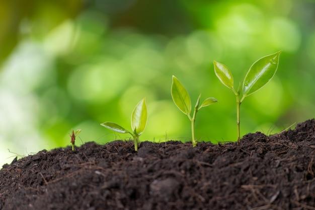 Деревья роста в свете утра природы и зеленой стене bokeh. всемирный день окружающей среды или земли. Premium Фотографии