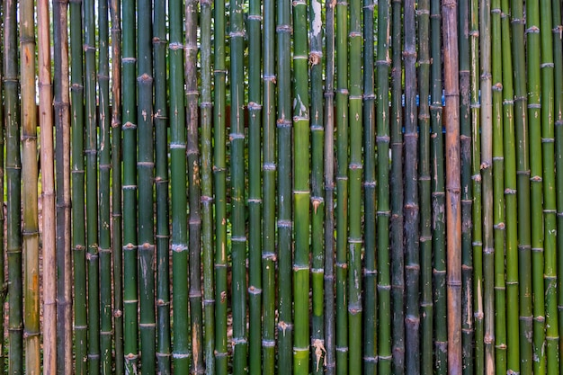 ornamental bamboo fence.htm grunge green bamboo fence texture background premium photo  green bamboo fence texture background