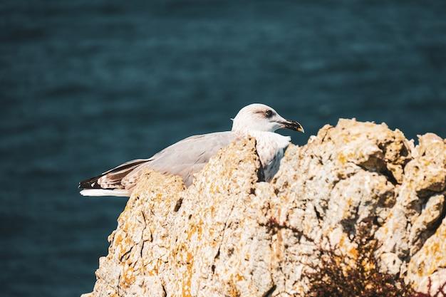 晴れた日に海の近くの岩の上に腰掛けたカモメ 無料写真