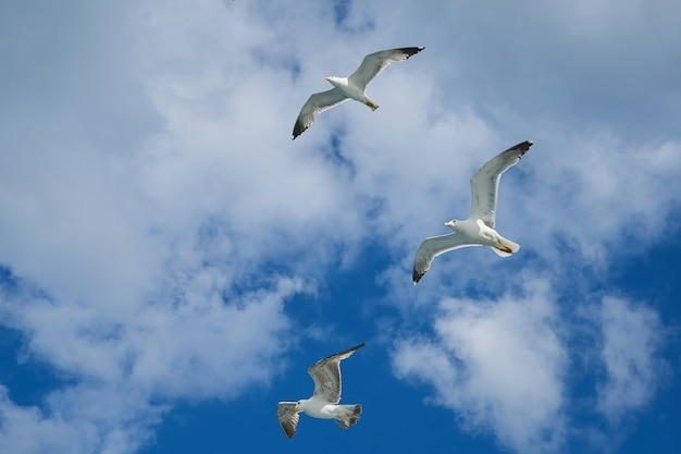Gulls flying in the sky Free Photo