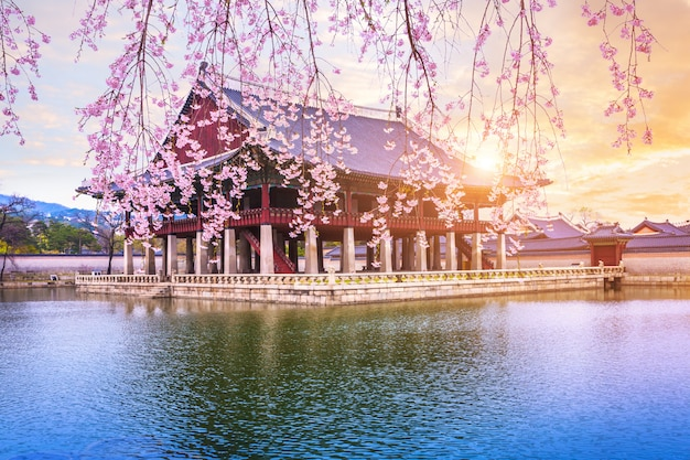 Gyeongbokgung palace with cherry blossom tree in spring time in seoul city of korea, south korea. Premium Photo