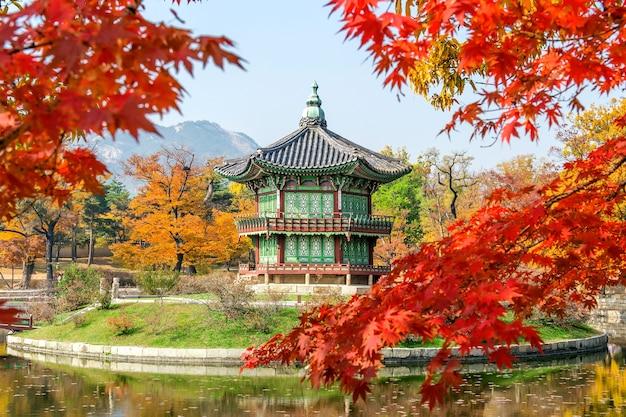 韓国の秋の景福宮とカエデの木。 無料写真