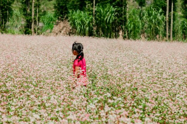 Поле цветков гречихи на ha giang, вьетнаме. ха гианг славится глобальным геологическим парком донг ван карстового плато. Premium Фотографии