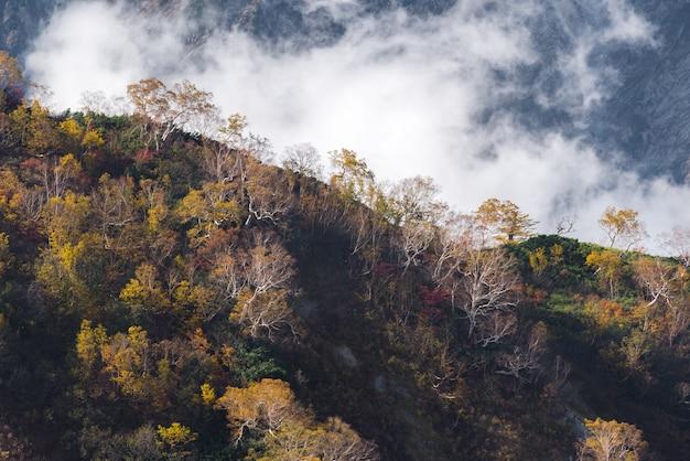 Hakuba valley autumn nagano japan Premium Photo
