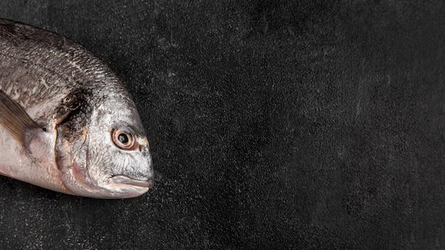 Metà dello spazio della copia del pesce Foto Gratuite