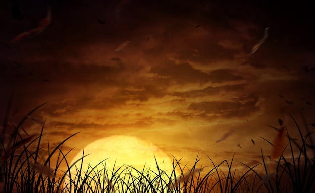 Halloween background a wide field with the moon on a scary night Premium Photo