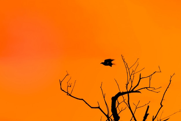 Halloween background with silhouette of a gnarled tree and a flying crow against the orange twilight Premium Photo