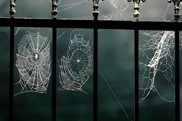 Halloween holiday, spooky tree, jumping spider, ebook, background, dark, greek mythology, spooky, gograph Premium Photo