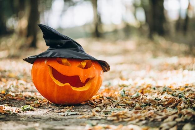 Halloween pumpkins in an autumn forest Free Photo