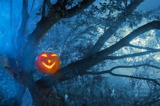 夜の森のハロウィンのカボチャ Premium写真