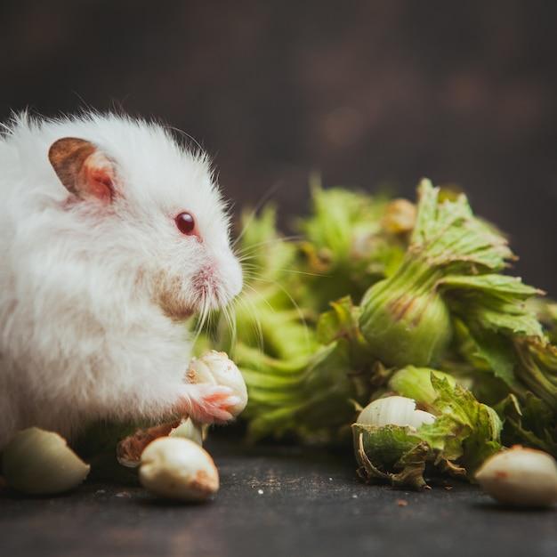 ダークブラウンのヘーゼルナッツを食べるハムスター。 無料写真