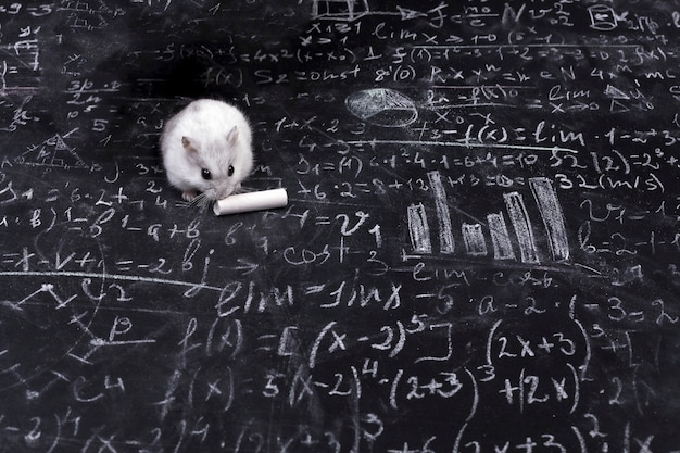 Hamster and science Premium Photo