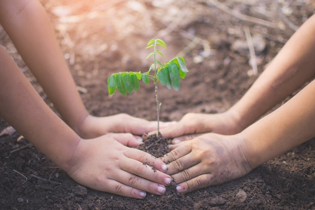 Hand of children holding plant and soil with bokeh and nature background Premium Photo