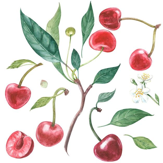 Рисованные акварельные цветы вишни и листьев Premium Фотографии