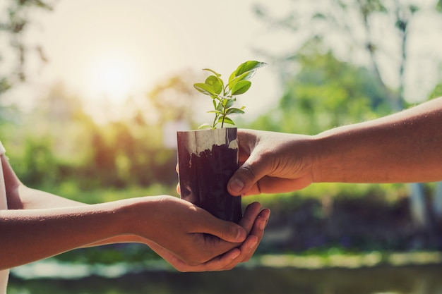 Hand giving plant for planting with sunrise Premium Photo