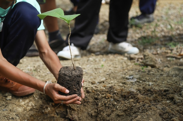 Hand hold tree for planting in world environment day Premium Photo