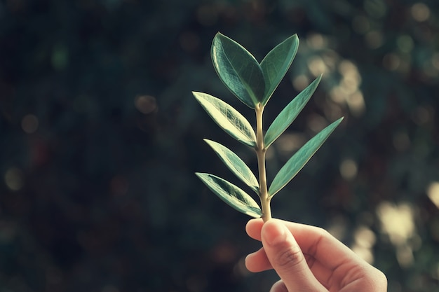 Hand holdging leaf on green nature background Premium Photo