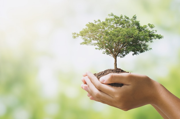 Hand holdig big tree growing on green background. eco earth day concept Premium Photo
