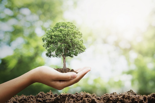 緑の背景に成長している手holdig大きな木。エコ地球の日の概念 Premium写真