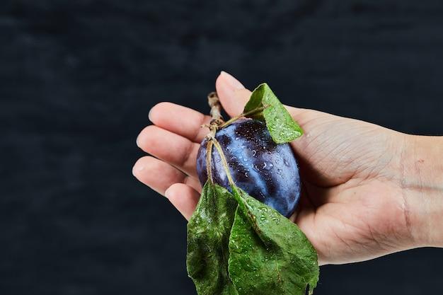 黒に新鮮な梅を持っている手。 無料写真