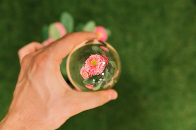 Hand holding glass sphere over the pink flower Free Photo