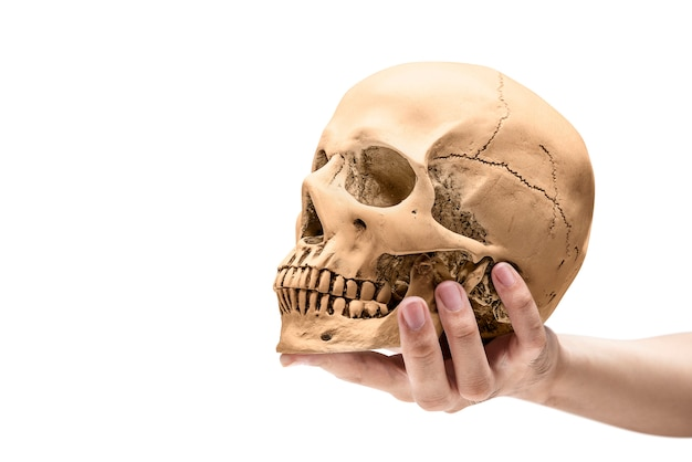 Hand holding human skull Premium Photo
