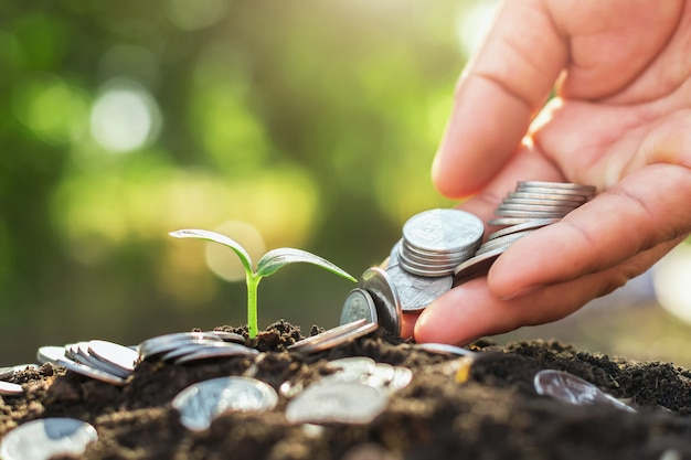 Hand holding money putting on soil and young growing Premium Photo