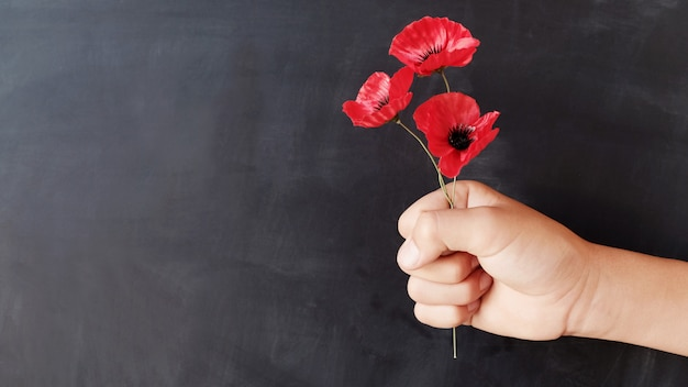 Hand holding red poppy flowers, remembrance day Premium Photo