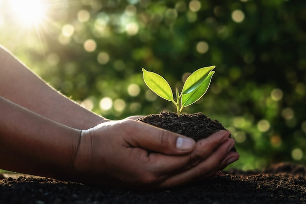 Hand holding small tree for planting in morning light. Premium Photo