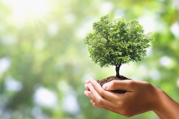Hand holding tree on blur green nature background.  eco earth day Premium Photo