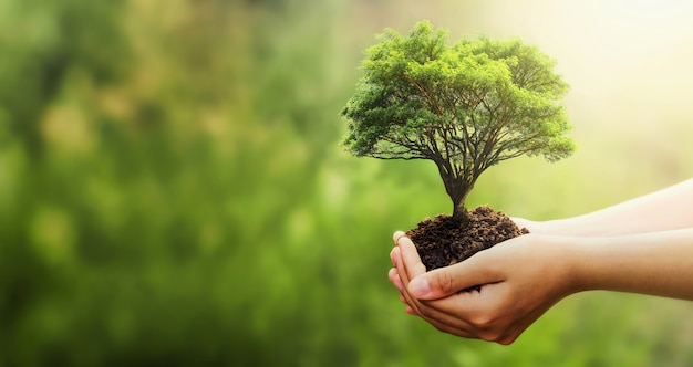 Hand holding tree on blur green nature
