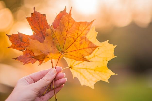 손을 잡고가 단풍 배경에 밝은 단풍. 손을 잡고 노란 단풍 잎 흐리게가 나무 배경.가 개념입니다. 선택적 초점입니다. 무료 사진