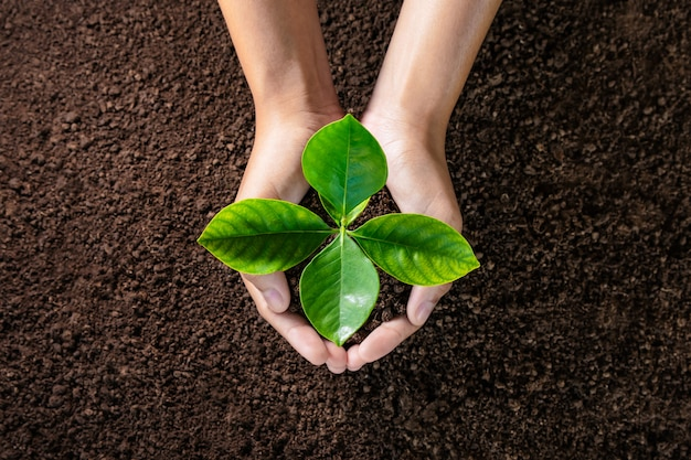 Hand holding young plant on soil Premium Photo
