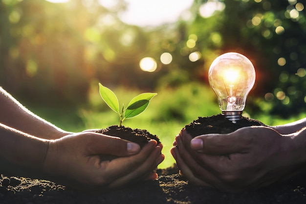 Hand holding young plant with light bulb on dirt and sunset Premium Photo