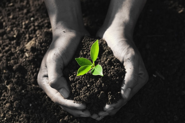 Hand holding young tree for planting. Premium Photo