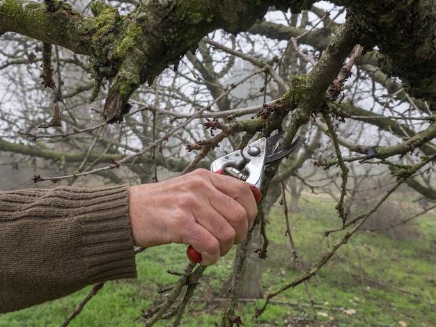 霧の日の秋の畑で、剪定ばさみで若い木を剪定する男の手 Premium写真