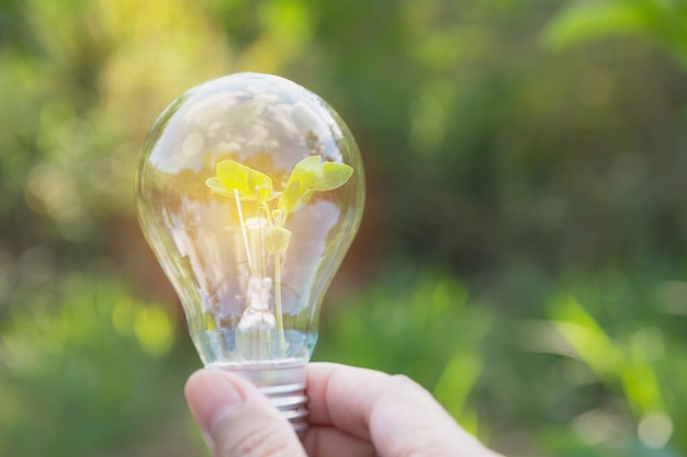 Hand Of Person Holding Light Bulb For Idea Or Success Solar Energy Concept Premium